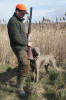 "BORN TO HUNT Just Weimaraner ""DERBY"" - next hunting day :)"